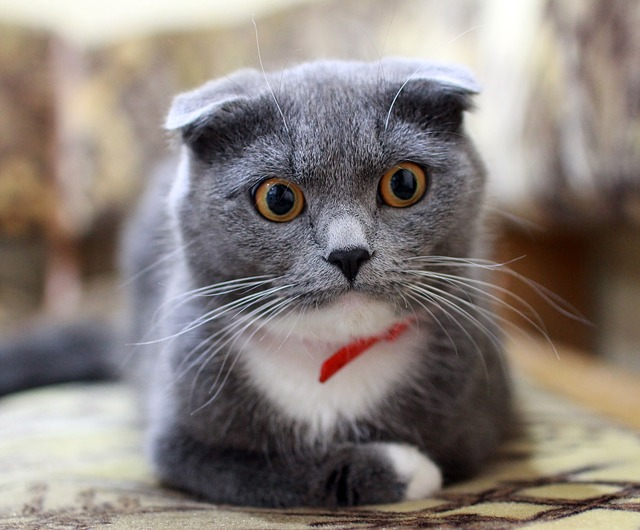 cat-2762156_640.jpg