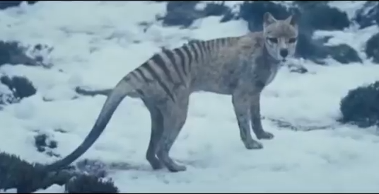 thylacine_The Hunter.png