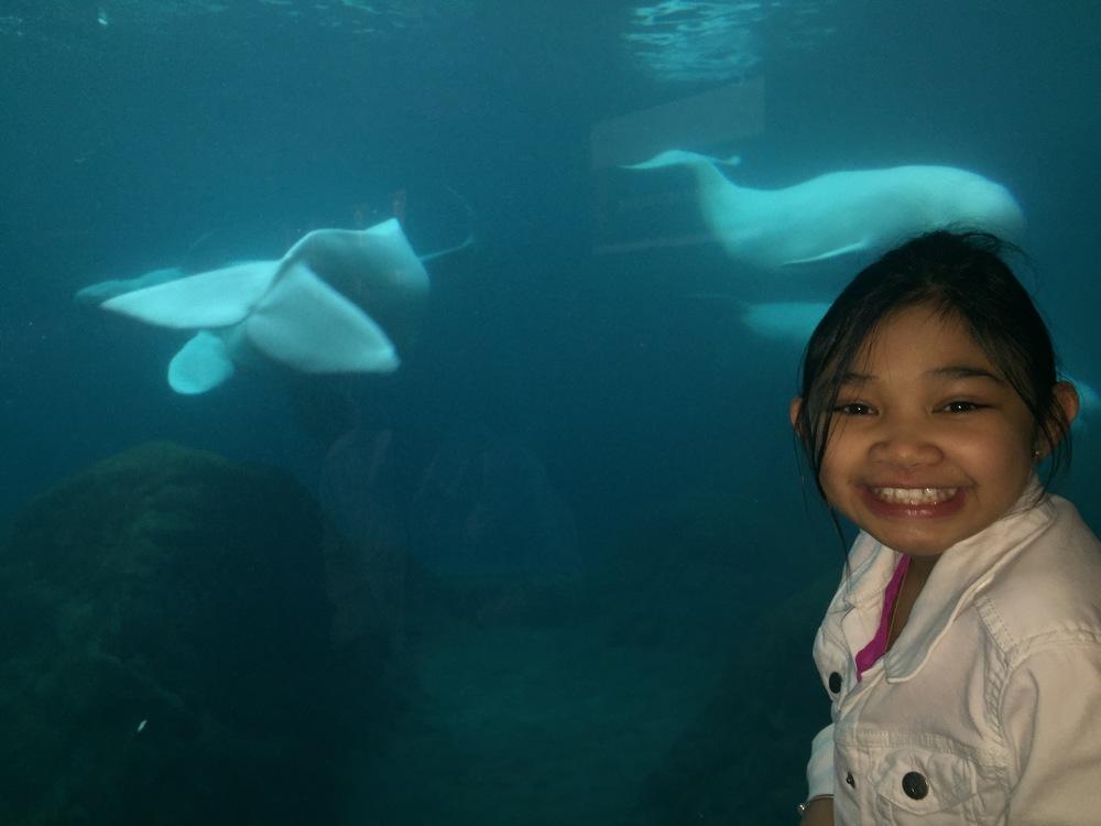 Beluga Whales!!!
