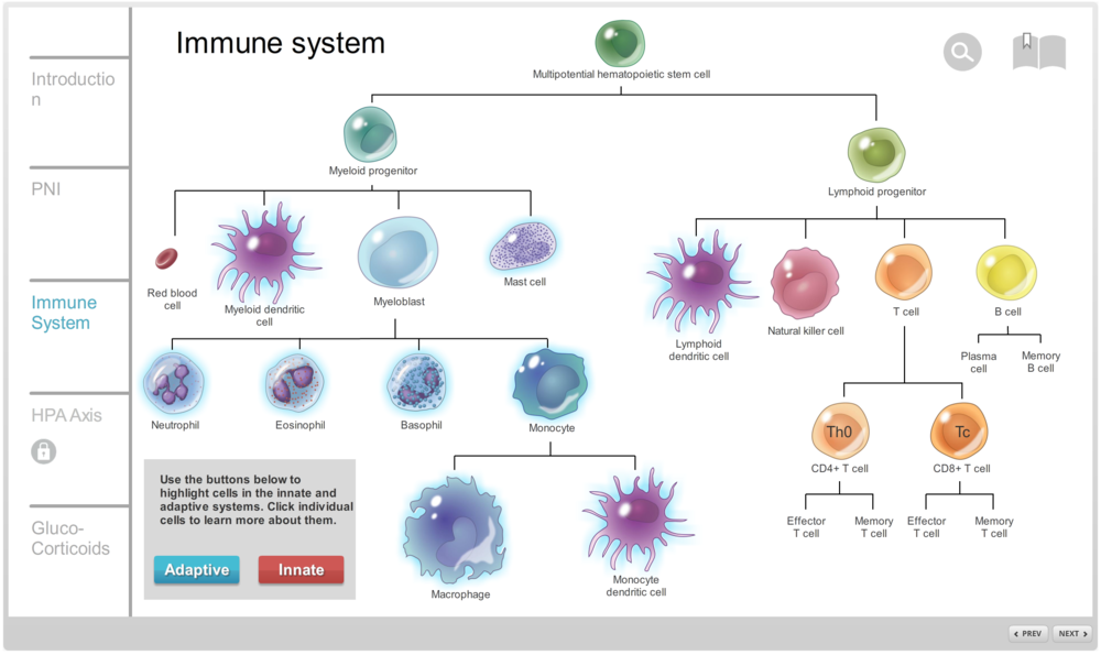 Overview of the immune system. Users can toggle between viewing cells in the innate or adaptive systems. Clicking each cell type will bring up an information box on that specific cell and provide a histology image.