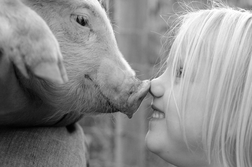 Pasture raised, organically fed pork.