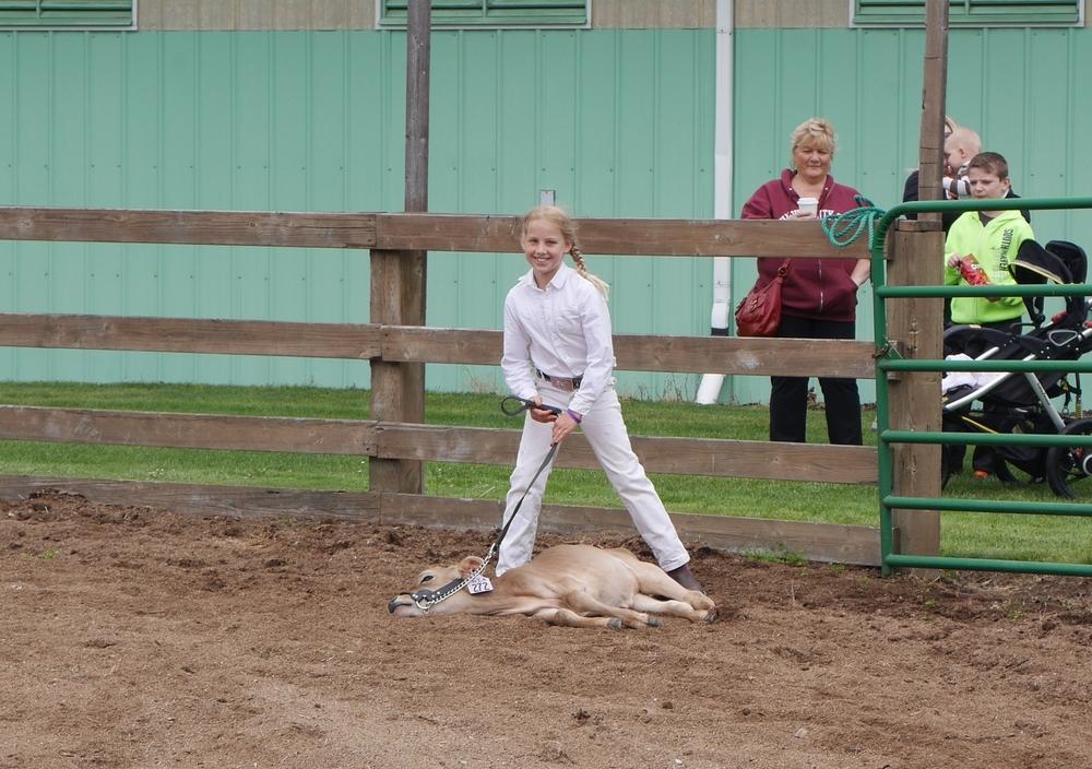 Libby's fainting calf.