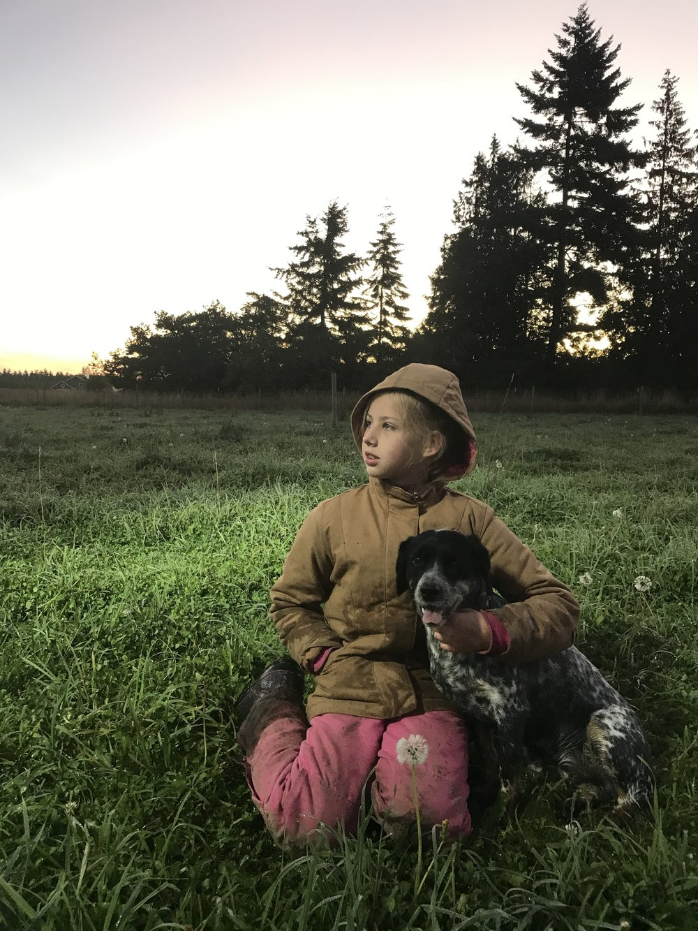 at sunrise with her dog at her side, libby watches the skilled work being done on butcher day.