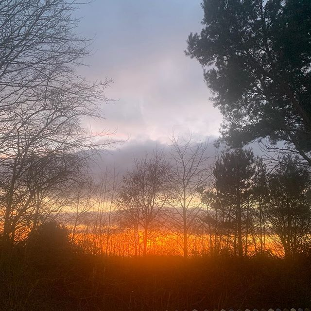 Sunset in the Forest of Mercia #Staffordshire #sunset #cannockchase #forestofmercia #midlands #pinetrees #scenery #livinginaforest #woodland #woodlandhills #scenic #scenicsunset