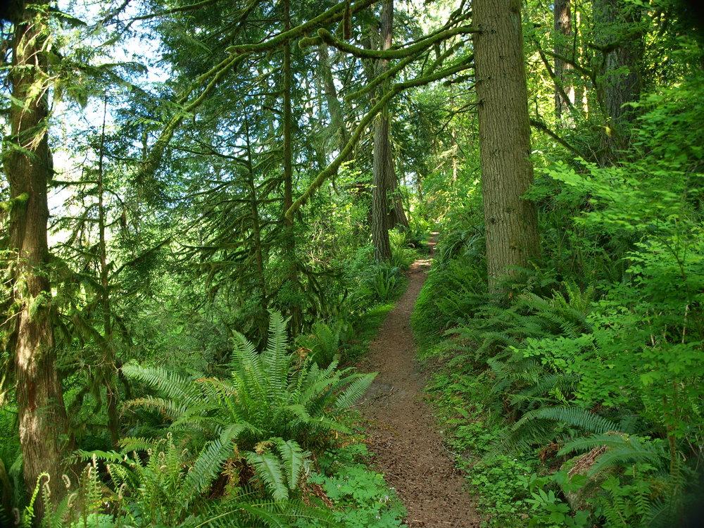 Woods Trail.jpg