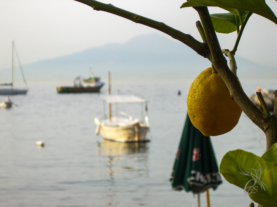 Italy: Sorrento Lemon Tree