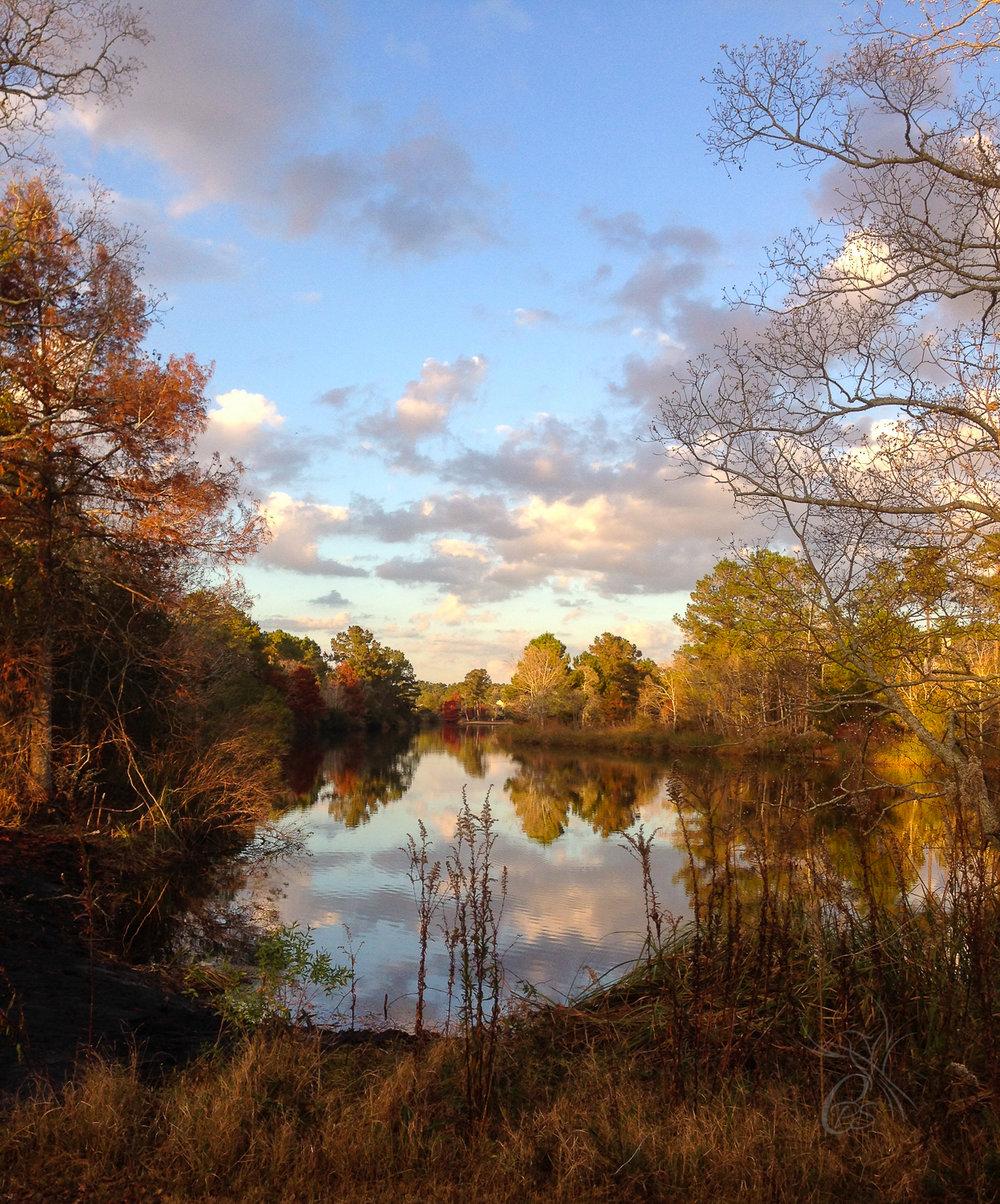 Bayou Autumn