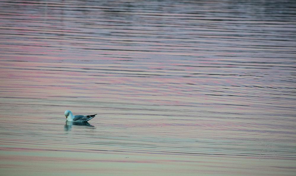 Nova Scotia: Seagull Bow