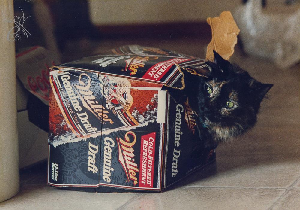 Frolicking Beer Cat