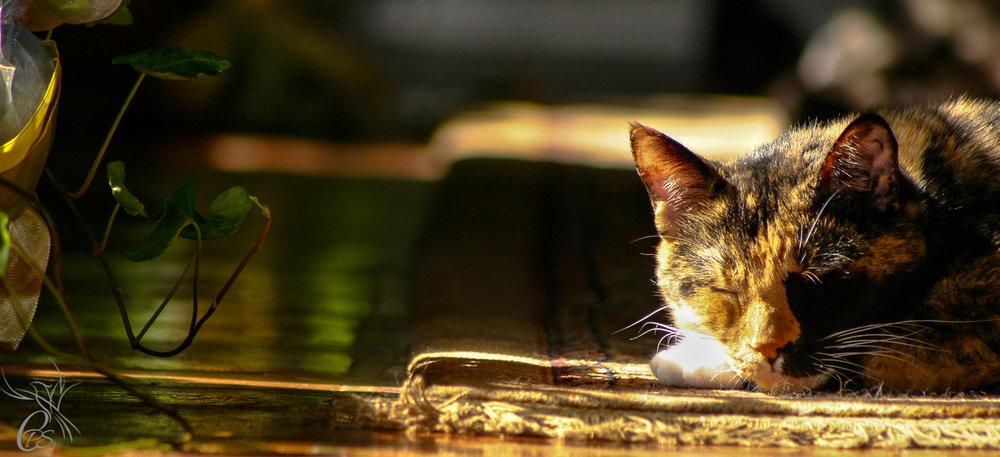 Sunny Snooze Cat