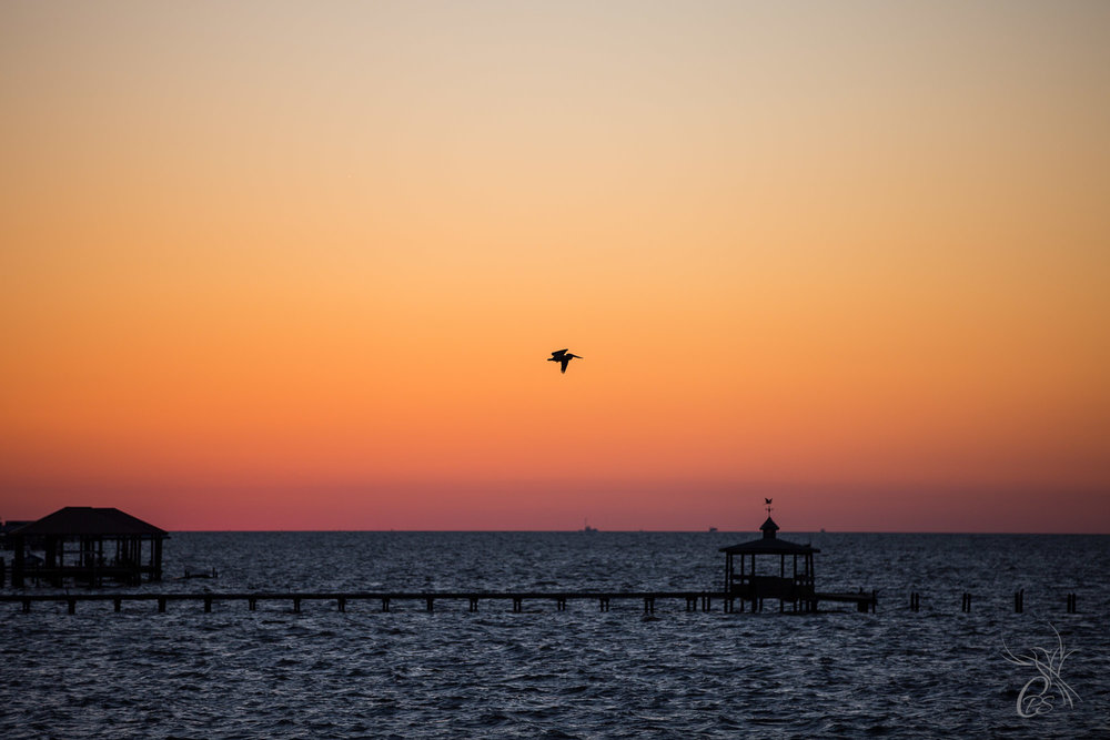 Sole Pelican at Sunset