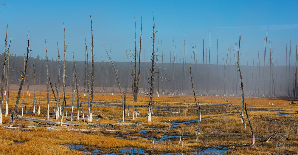 Yellowstone: Dead Trees
