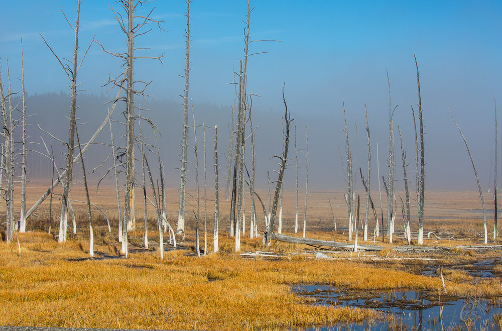 Yellowstone: Dead Trees2