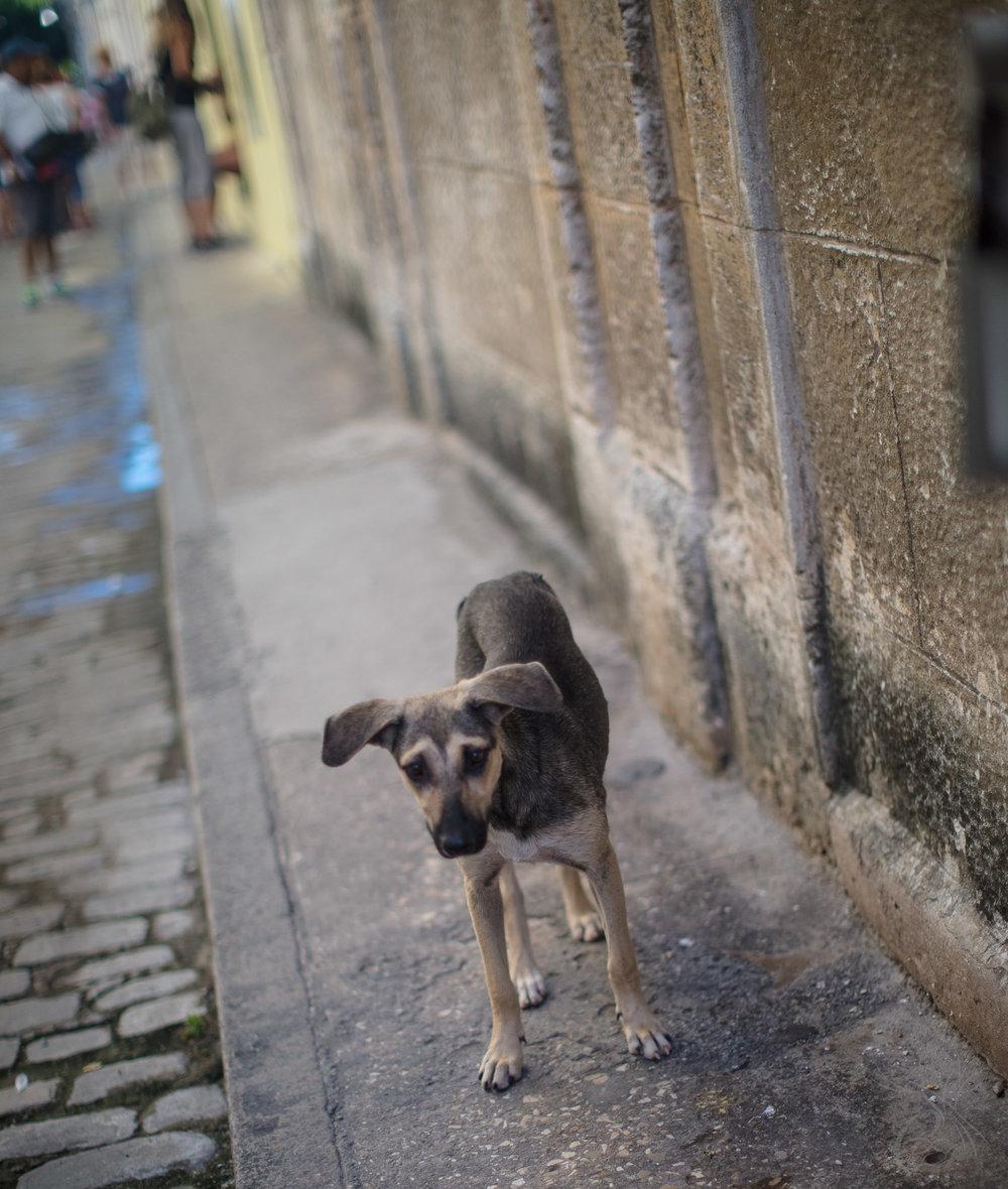Cuba: Havana Dog