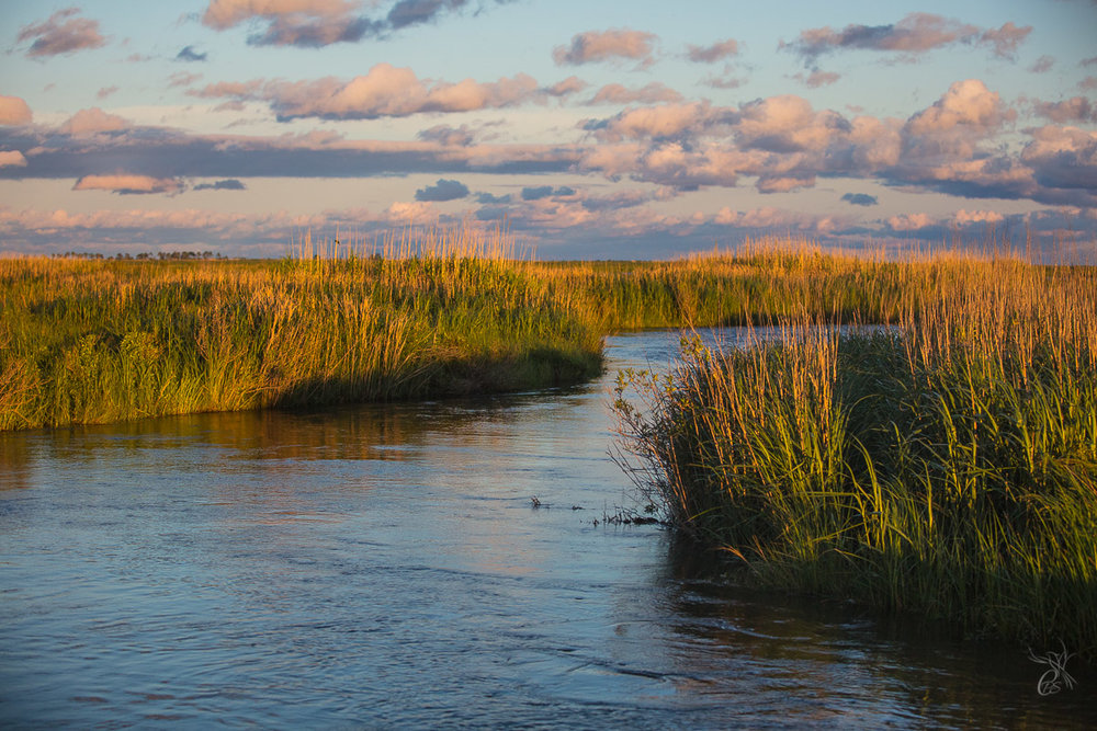 Bayou Reeds in Sunset