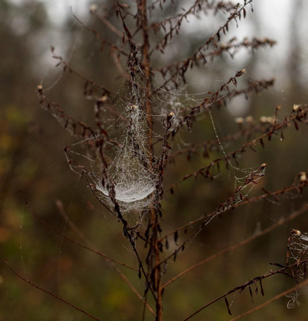 Cobweb Fairy
