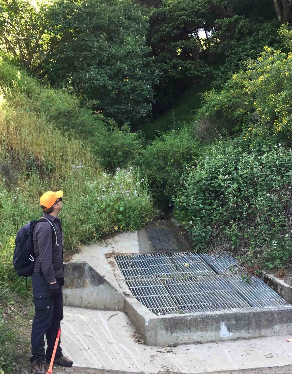 Board Member Josh Borkowski gazes up at the only part of Derby Creek that sees the light of day. Stream channels were completely filled-in years ago and were replaced by one large storm drain network, according to a 2010 report published by the Oakland Museum.