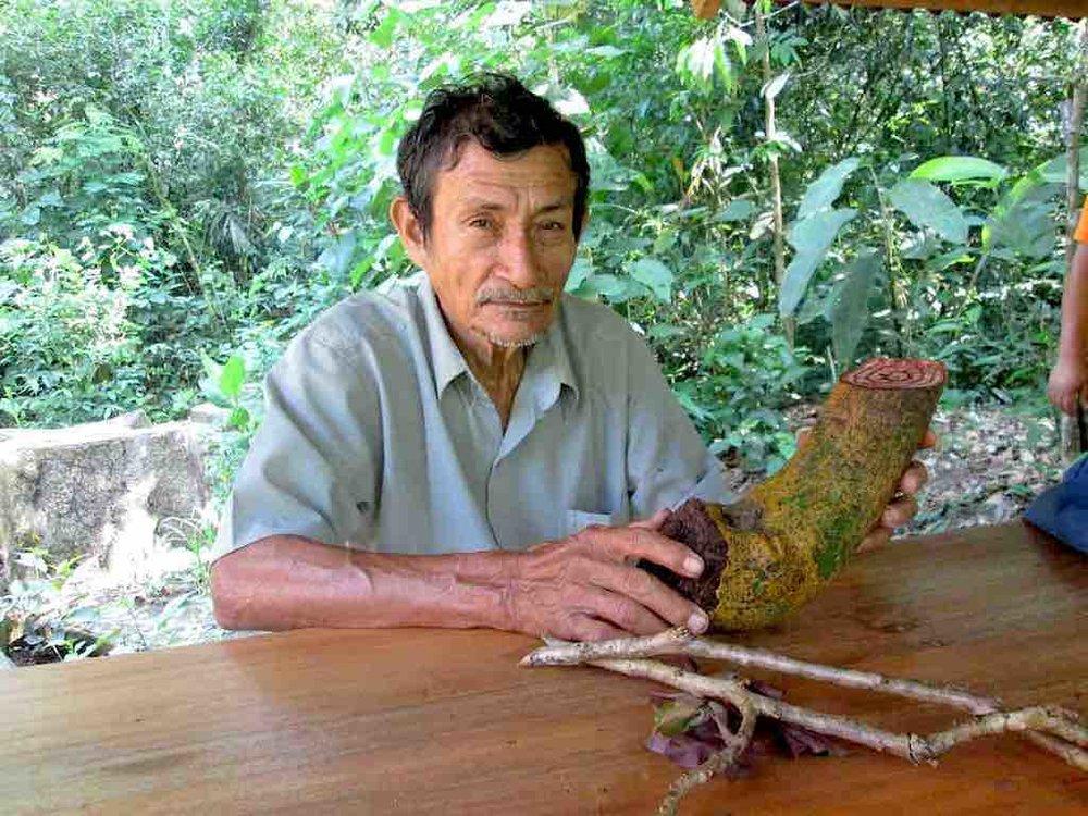 Plant Maestro Don Ricardo