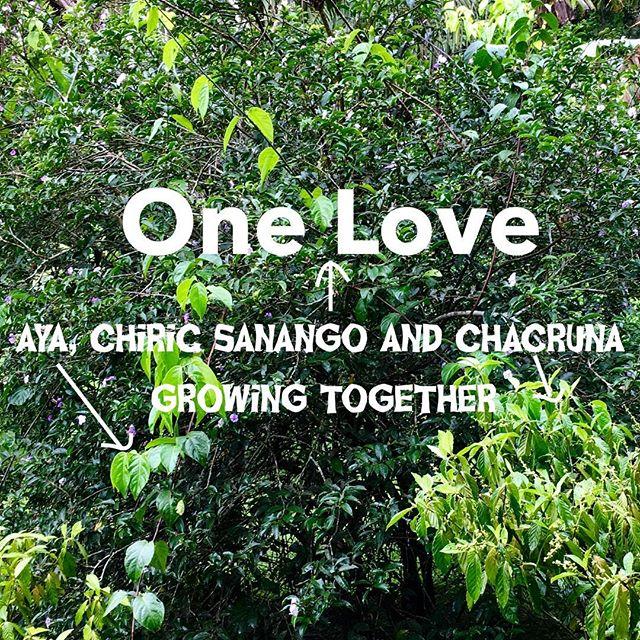 #onelove,#plantmedicine ,#ayahuasca ,#chacruna ,#amazonforest ,#retreat ,#shamanichealing