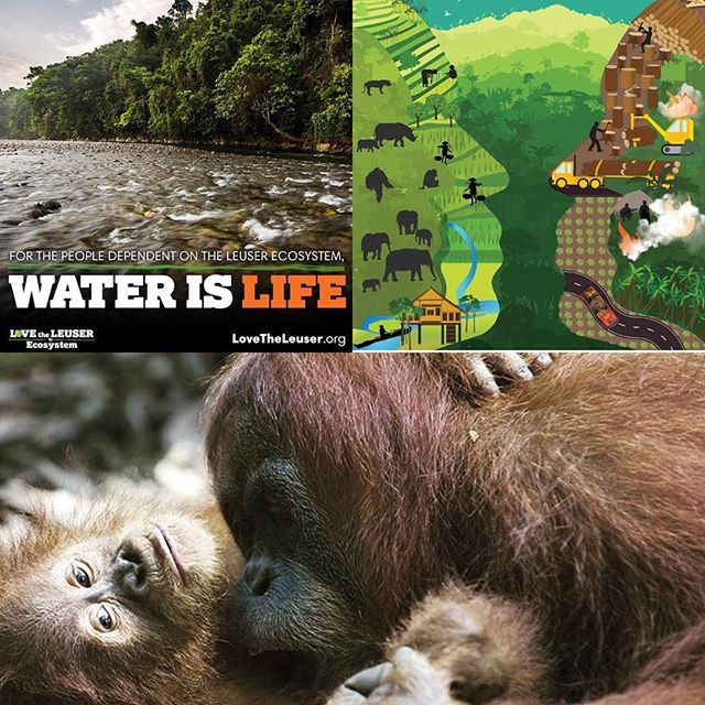 We're voting every day with every dollar we spend.  Unfortunately, so many goods contain palm oil even though it's not needed.  With billions of dollars in line, many would want to keep the effects hidden.  But here it is: the destruction of forest, animals and water. #waterislife #lovetheleuser #nature #saynotopalmoil #orangutans  #convergencestory #earth www.lovetheleuser.org