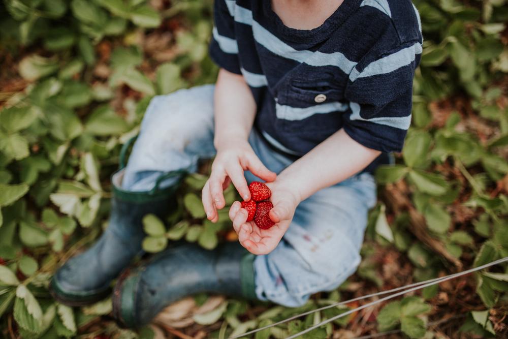 strawberry-7333.jpg