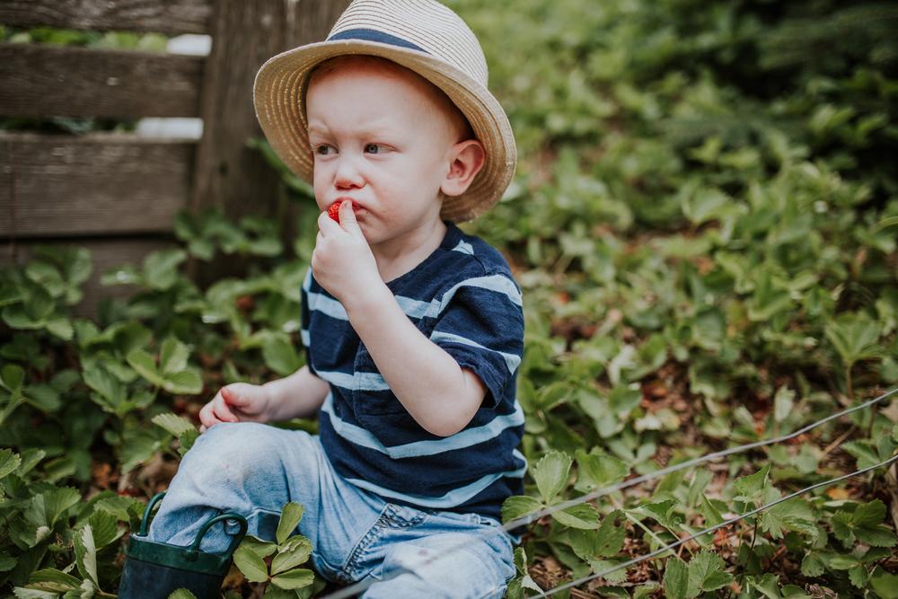 strawberry-7332.jpg