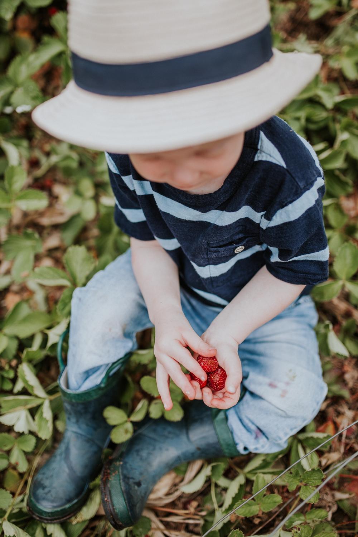 strawberry-7334.jpg