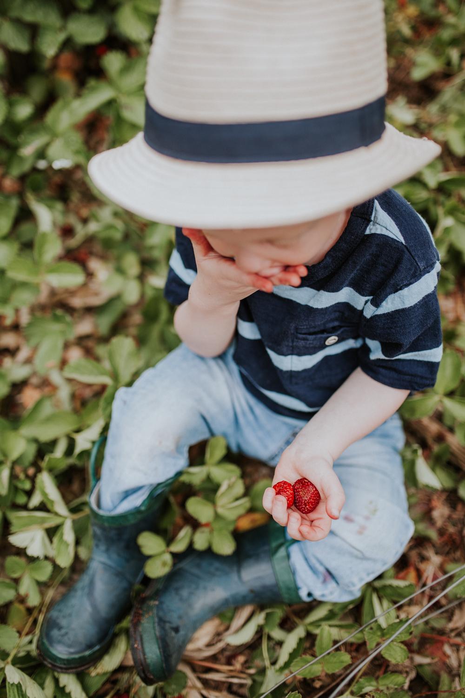 strawberry-7335.jpg