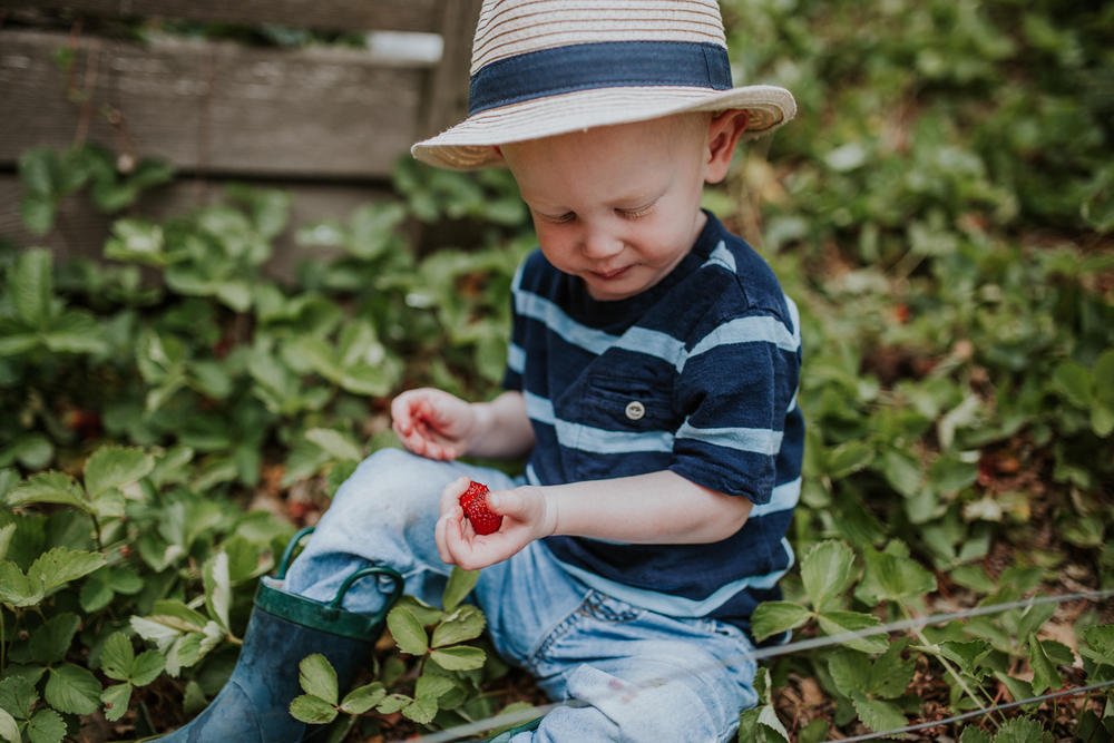 strawberry-7336.jpg