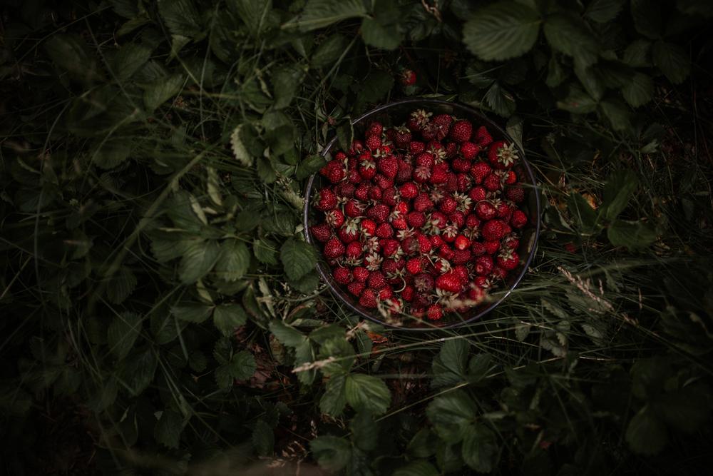 strawberry-7391.jpg