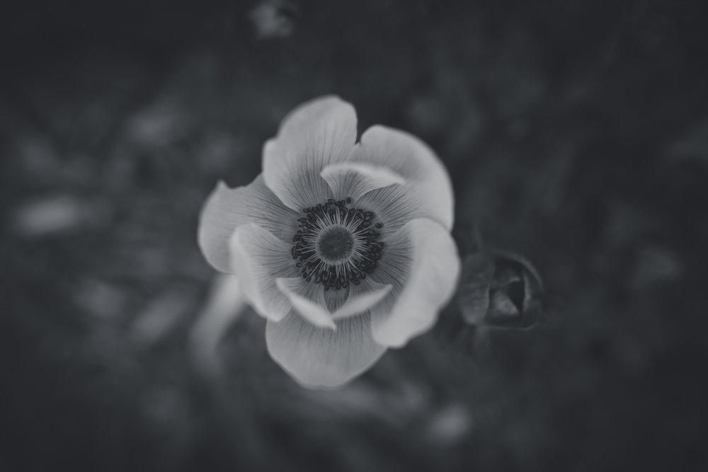 April-6065.jpg