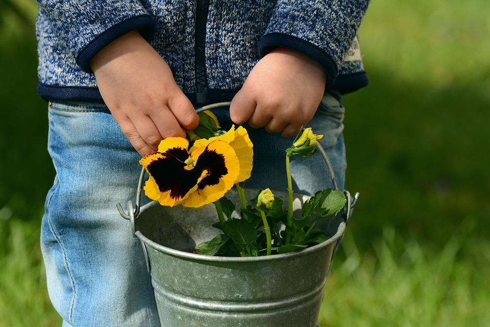 Pansies in bucket.jpg