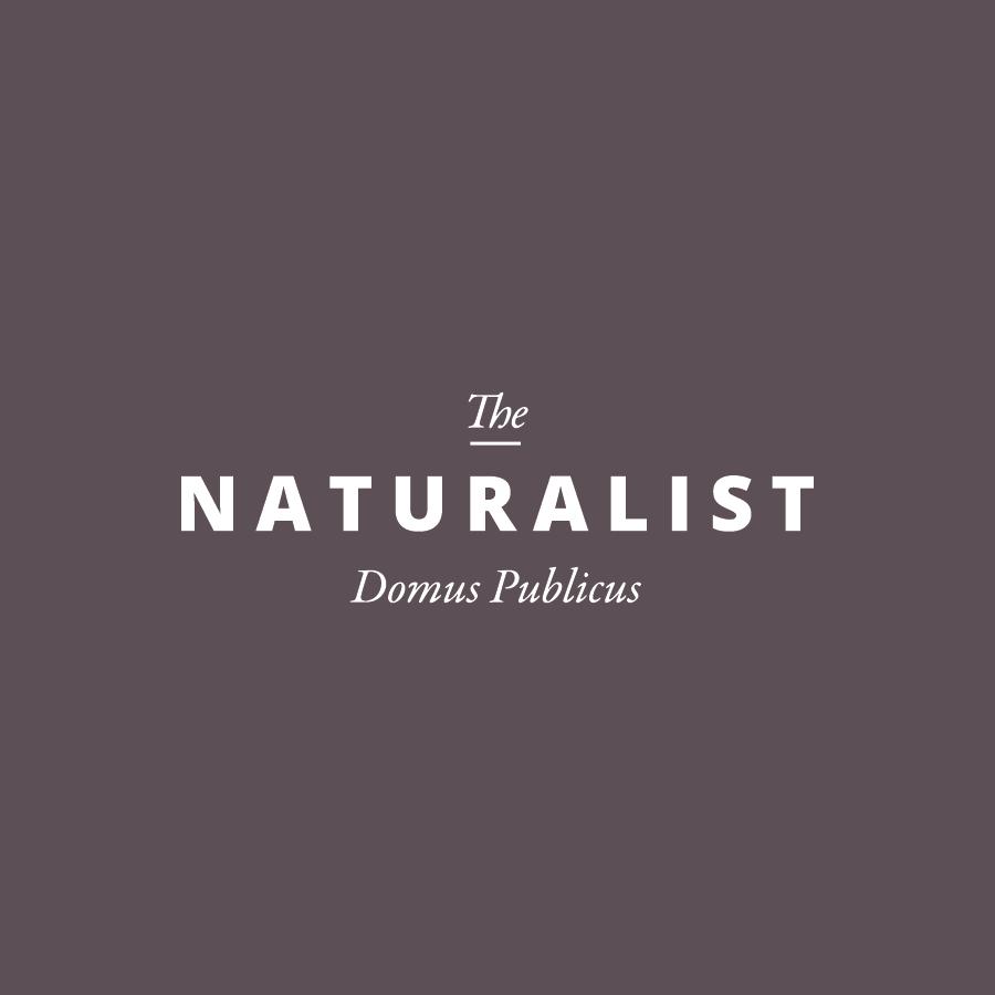 portfolio-thumbnails-01.png