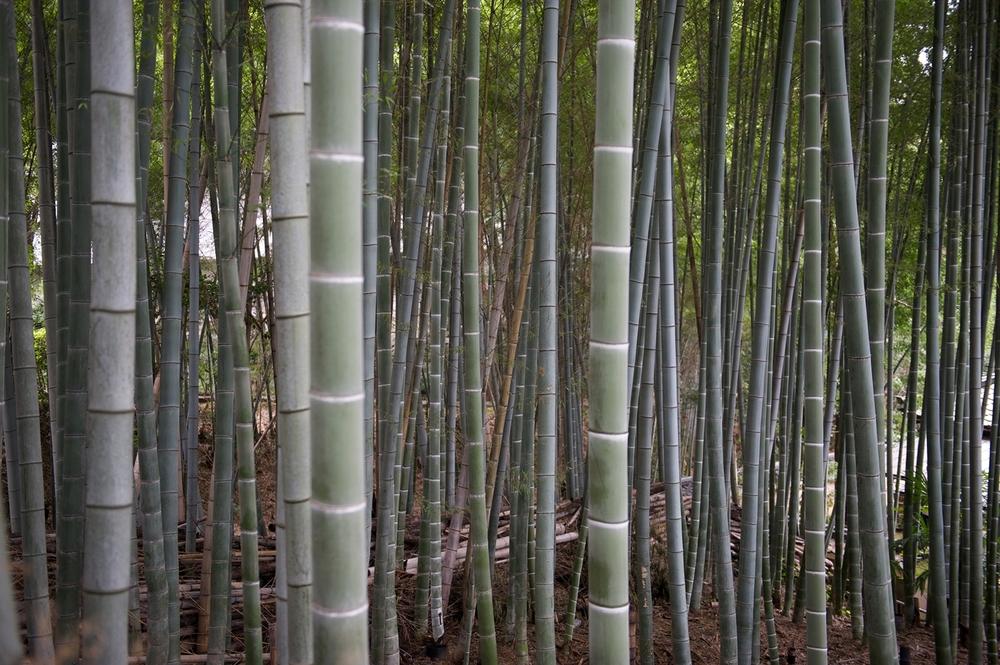2009_1001 Kyoto Japan_1010 copy copy.jpg