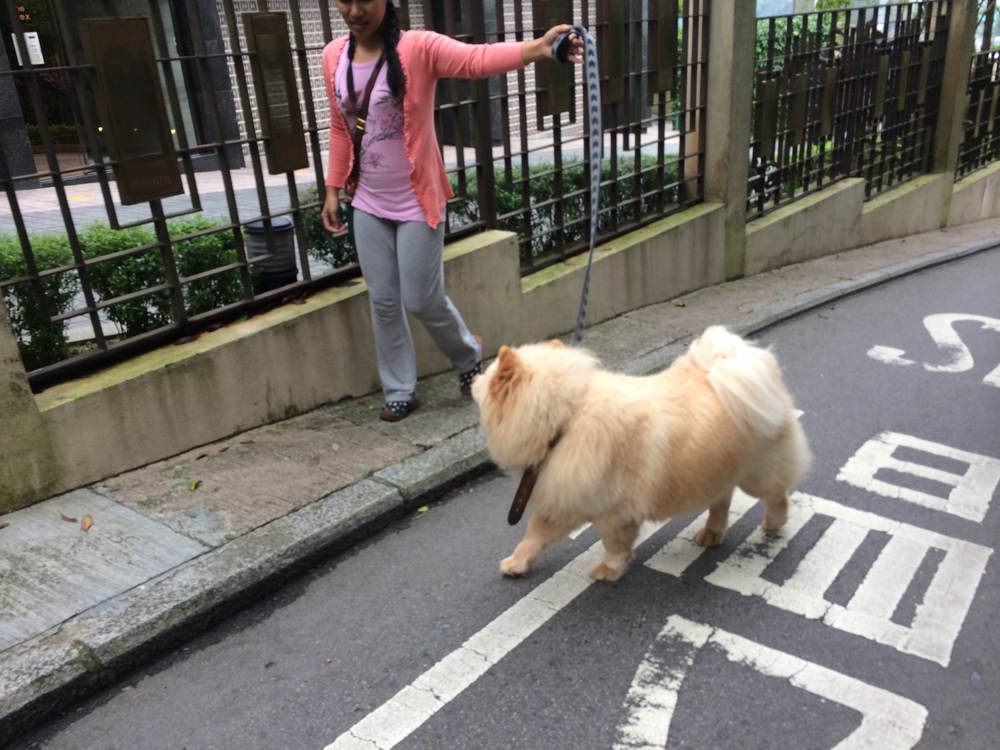 I encountered a friendly dogwalker © Traverate