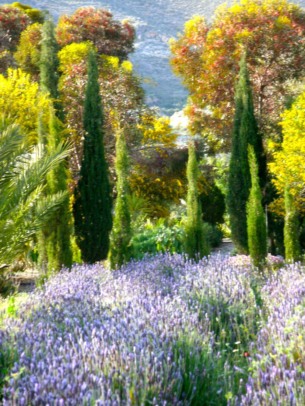 Garden copy.jpg