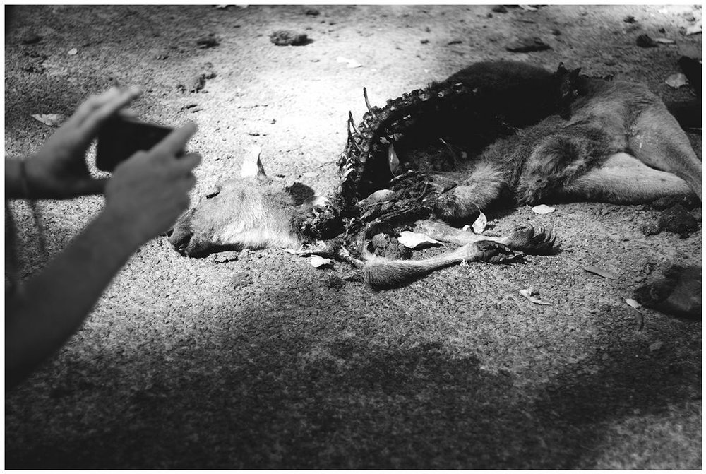 Pete Photographs a Dead Roo, Nannup, WA. Tahlia Palmer, 2016