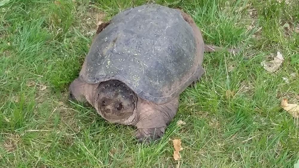 RP-turtle.jpg