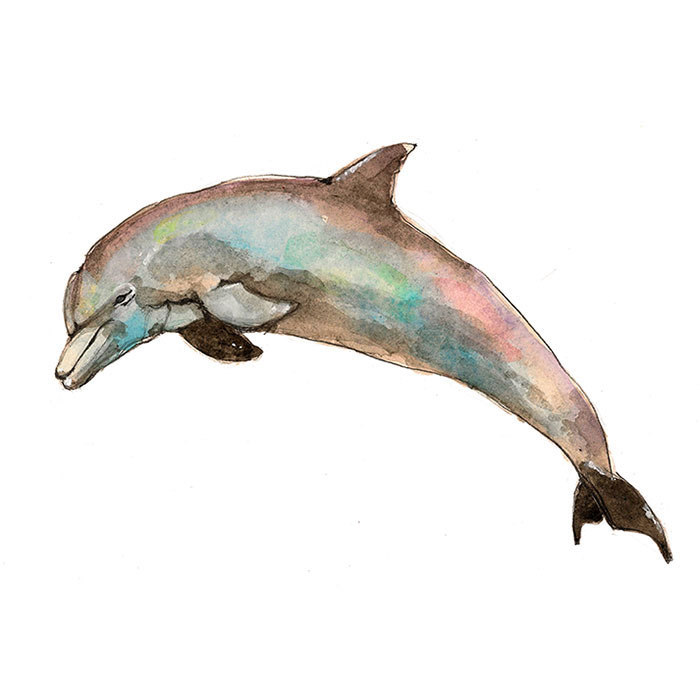 animal_book_dolphin.jpg