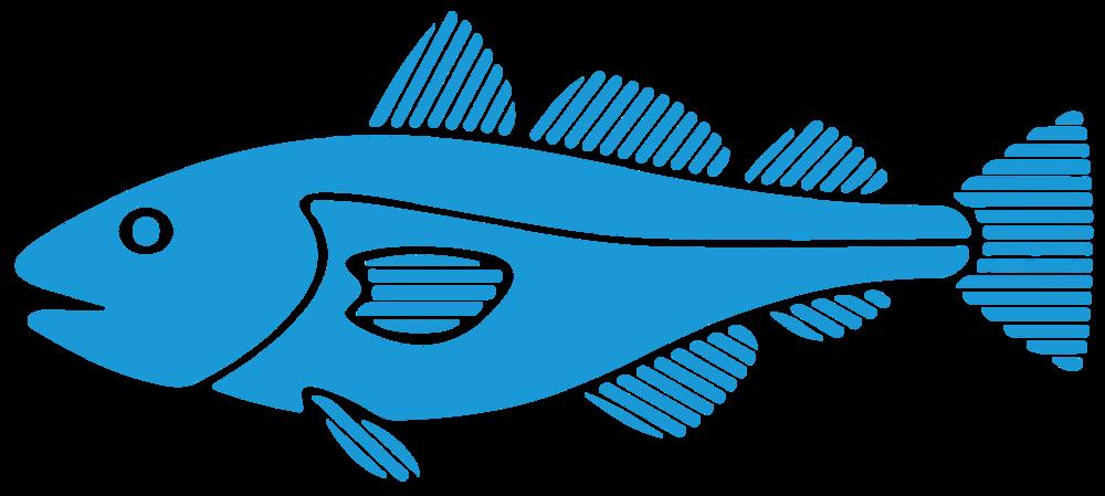 Local Fish Wildlife - Kennebunkport, Maine