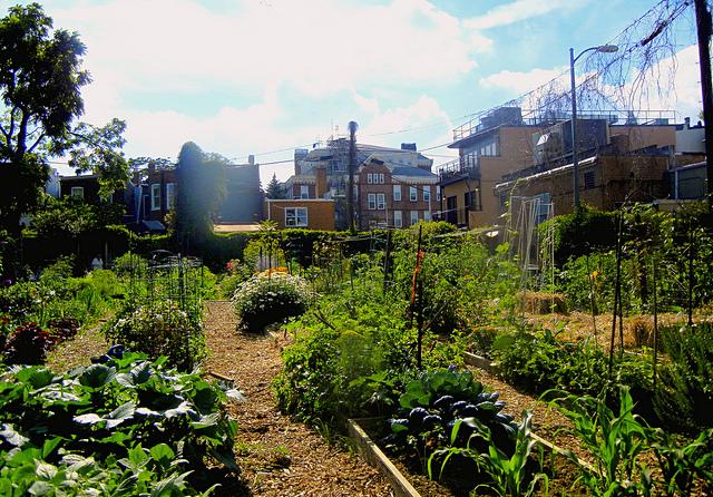 C apitol Hill Community Garden.
