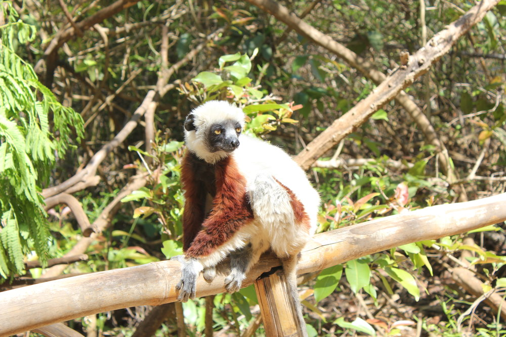 5 Places To Spot Lemurs | Madagascar