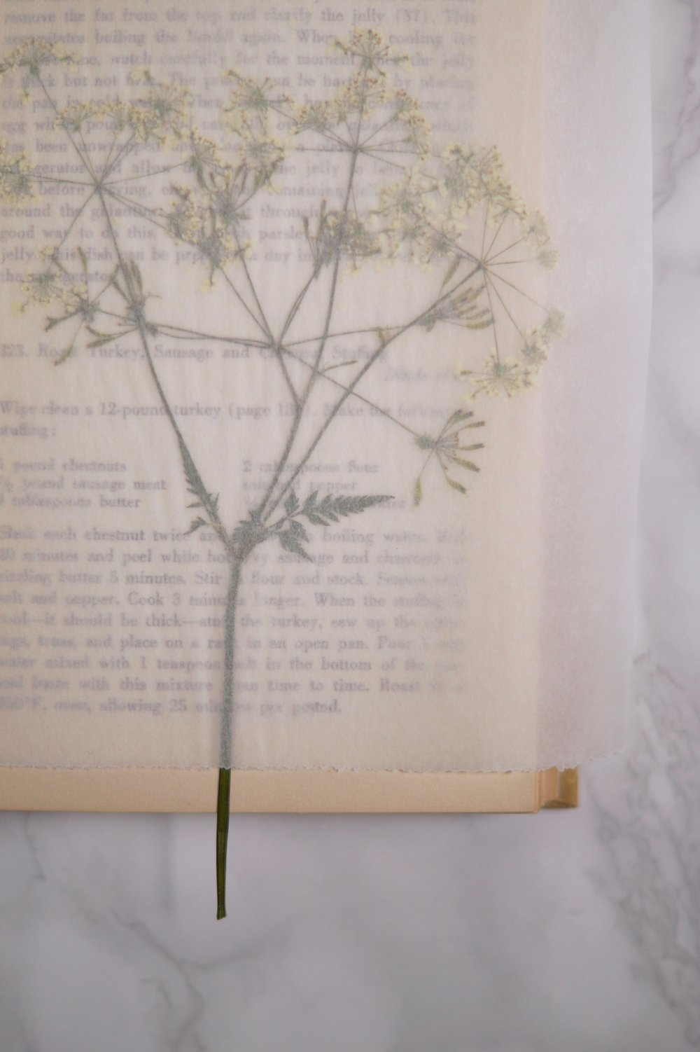 pressed cow parsley.jpg