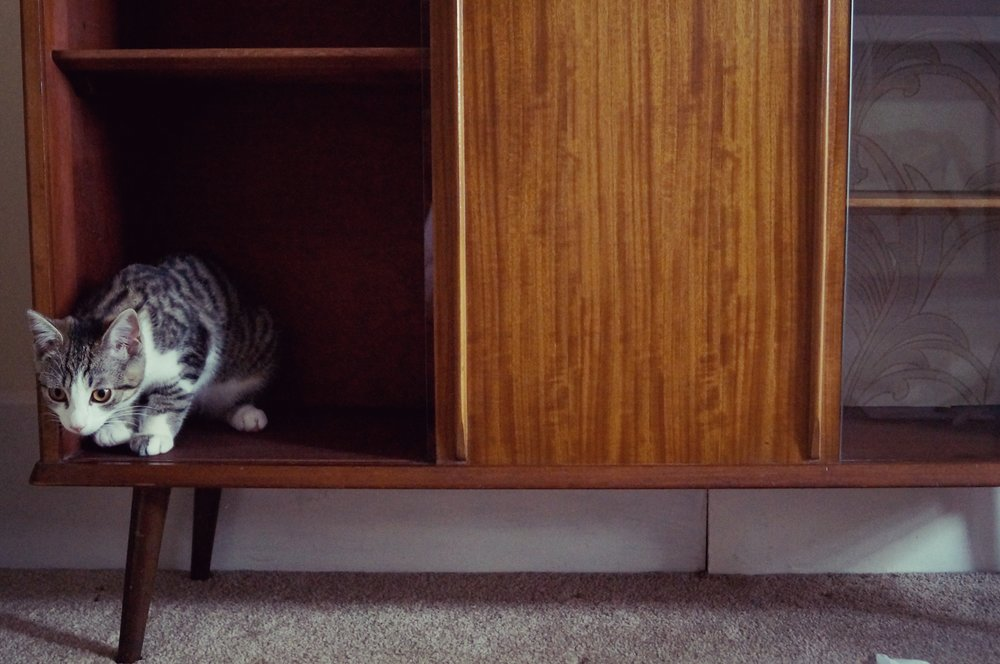 CAT IN A DISPLAY CABINET.jpg