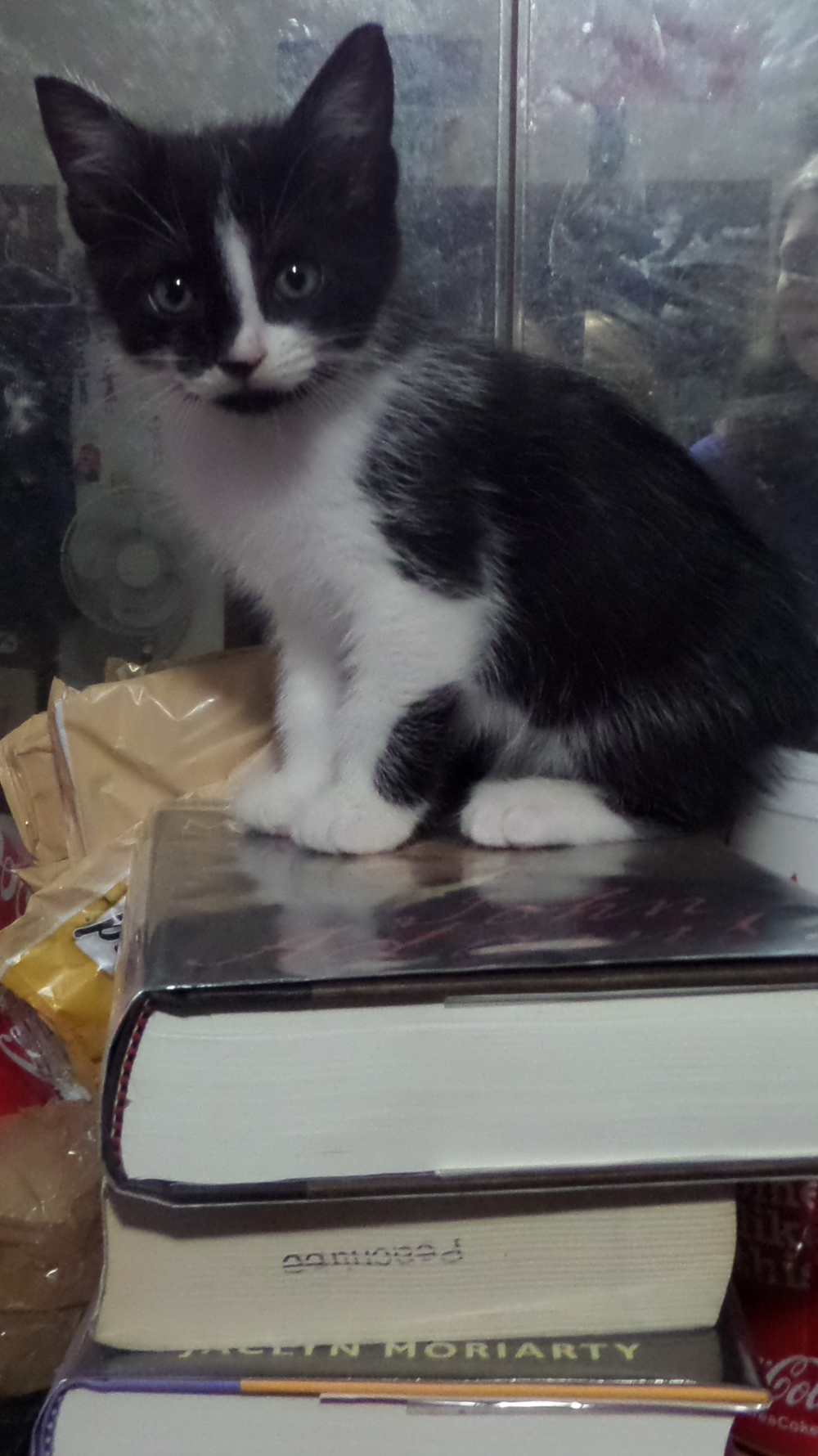 A kitten on books. Because that's what you get with the podcast with Suzanne and Amy