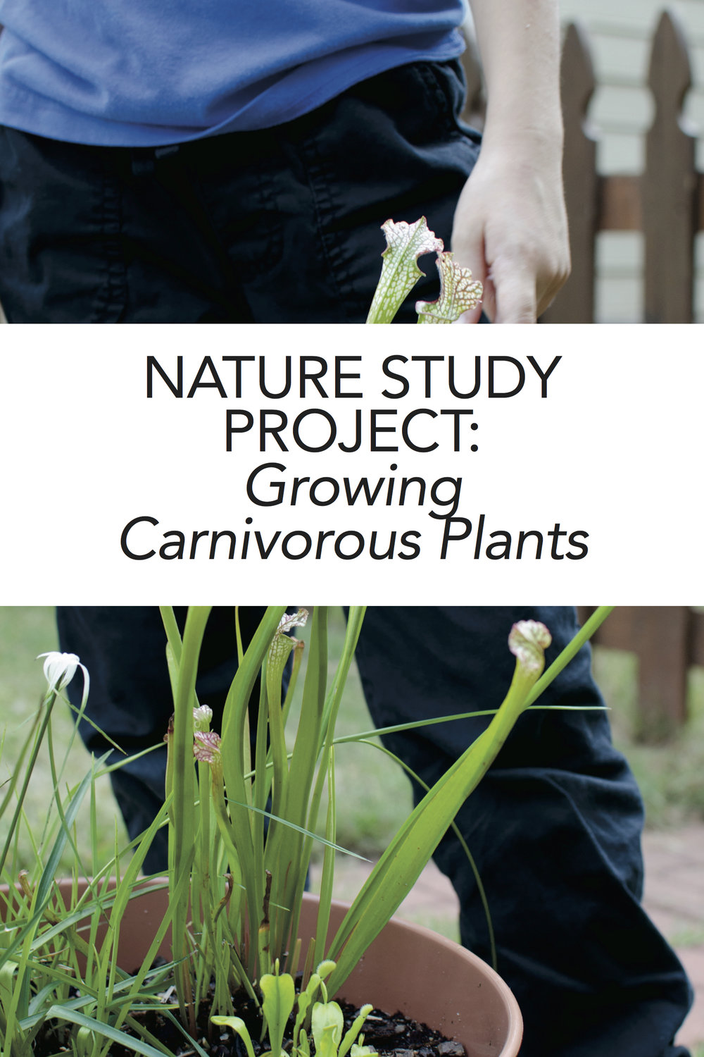 Fun homeschool project! Grow your own carnivorous plants as nature stufy