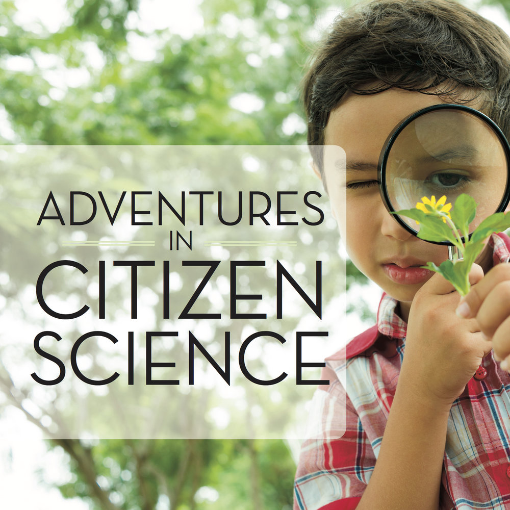 Citizen Science Project #11: Project Implicit