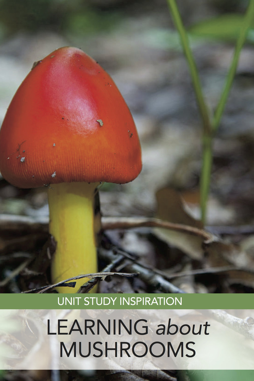 Resources for an elementary level unit study about mushrooms. Love that it includes living books as well as more traditional resources. #homeschool