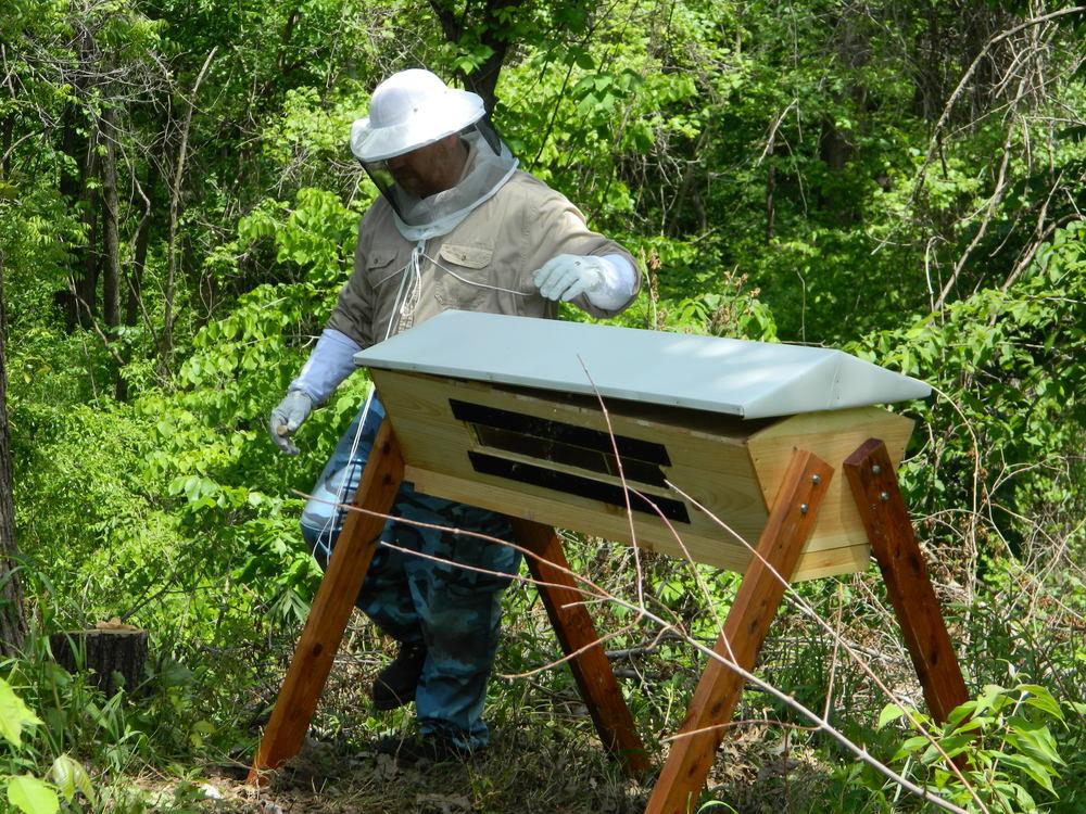 Bee Habitat hive