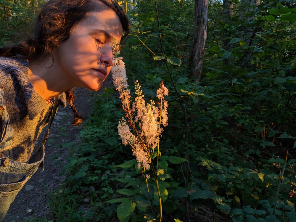 Botany, mycology, and foraging can profoundly change how you interact with the world and can help you find deep joy in things as simple as the scent of a black cohosh flower at sunset in the Blue Ridge Mountains. Each study is a journey for a lifetime, and I hope we can take that journey together!